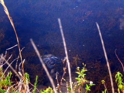 El fondo de  nuestra casa esta el canal y las tortugas